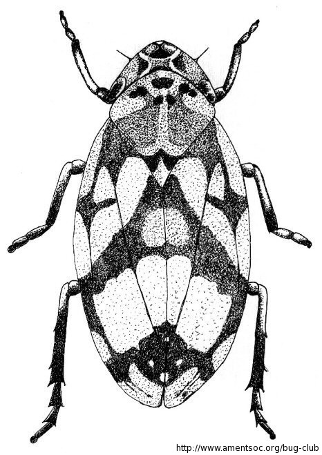 bug club | ActiveLearn: Login - linkddl.com