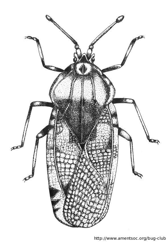 Bug club active