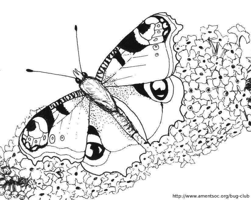 Insect colouring activities for children - Amateur Entomologists ...