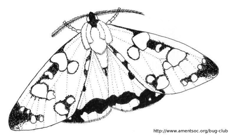coloring pages moth in moonlight - photo#35