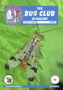 April 2009 Bug Club Magazine cover showing a photograph of a scorpion fly (_Panorpa communis_)