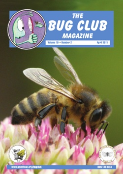 April 2011 Bug Club Magazine cover showing a photograph of a honey bee _Apis mellifera_.