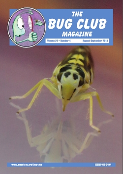 August 2013 Bug Club Magazine cover showing a photograph of the leaf hopper _Eupteryx aurata_