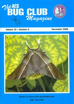 December 2008 Bug Club Magazine cover showing the Giant Uranid Moth (_Lyssa zampa_) from SE Asia. This moth likes to rest upside down.