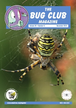 December 2012 Bug Club Magazine cover showing a photograph of a female wasp spider, _Argiope bruennichi_.