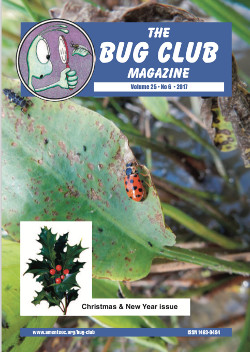 December 2017 Bug Club Magazine cover showing the the 13-spot ladybird, _Hippodamia 13-punctata_