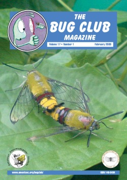 February 2009 Bug Club Magazine cover showing a photograph of a mating pair of Humming-bird hawk moths
