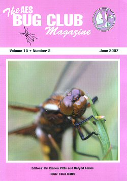 Bug Club Magazine cover - June 2007 - showing a photograph of an immature male Broad-bodied chaser dragonfly (_Libellula depressa_)