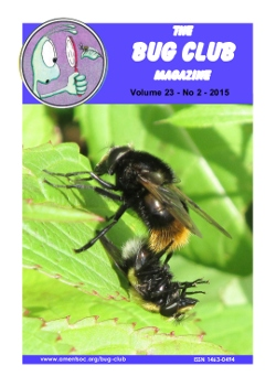 June/July 2015 Bug Club Magazine cover showing two _Volucella bombylans_ hoverflies