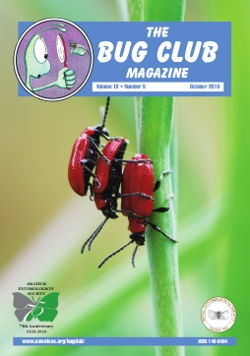 October 2010 Bug Club Magazine cover showing three Lily beetles, _Lilioceris lilii_.