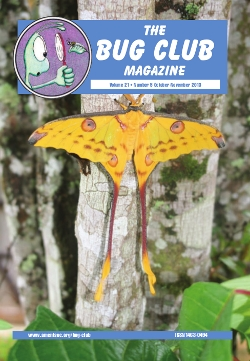 October 2013 Bug Club Magazine cover showing a photograph of a Comet moth _Argema mittrei_.
