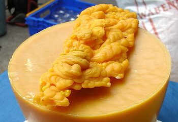 A photograph of beeswax before it is turned into a candle or other beeswax product.