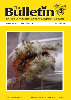 April 2008 Bulletin cover showing larvae and pupae of the parasitic wasp _Cotesia_ sp. surrounding their Lepidoptera caterpillar host