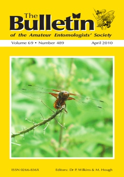 April 2010 Bulletin cover showing an adult Broad-bodied Chaser dragonfly (_Libellula depressa_)