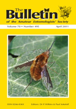 April 2011 Bulletin cover showing the Dark-edged Bee-fly (_Bombylius major_)