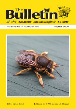 August 2009 Bulletin cover showing a Wool Carder Bee (_Anthidium manicatum_)