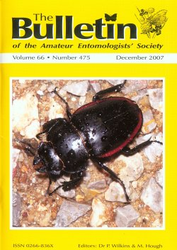 December 2007 Bulletin cover - showing a photograph of the beetle _Odontolabis cuvera_ from northern Thailand