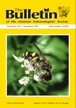December 2009 Bulletin cover showing a picture of a female _Crabro cribarius_. This solitary wasp is fairly widespread in Britain. Photograph by Dr. David Skingsley.