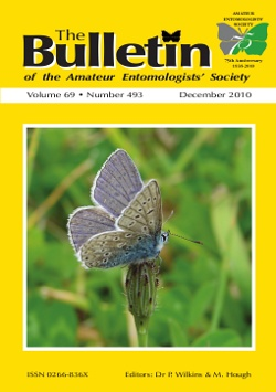 December 2010 Bulletin cover showing an adult male Common Blue (_Polyommatus icarus_).