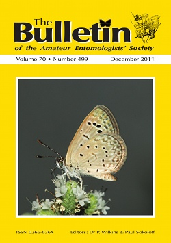 December 2011 Bulletin cover showing a photograph of the African Grass Blue _Zizeeria karsandra_