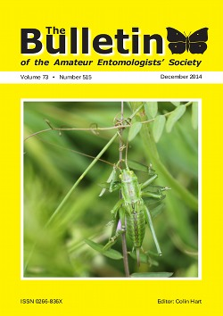 December 2014 Bulletin cover showing a Great Green Bush-cricket (_Tettigonia viridissima_). .