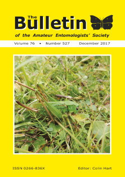 December 2017 Bulletin cover showing the Wart-biter Bush-cricket _Decticus verrucivorus_.