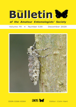December 2020 Bulletin cover showing the Pale Brindled Beauty moth _Phigalia pilosaria_