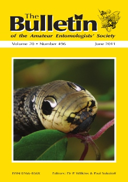 June 2011 Bulletin cover showing the larva of the Elephant Hawkmoth (_Deilephila elpenor_)