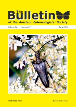 June 2015 Bulletin cover showing the longhorn beetle _Stenocorus meridianus_.