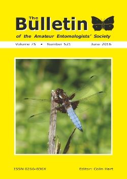 June 2016 Bulletin cover showing the Broad-bodied Chaser _Libellula depressa_.