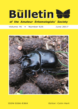 June 2017 Bulletin cover showing the Minotaur Beetle _Typhaeus typhoeus_