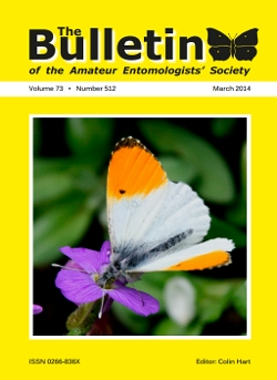 March 2014 Bulletin cover showing a male Orange-tip (_Anthocharis 