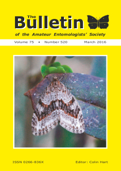 March 2016 Bulletin cover showing the Barred Tooth-striped _Trichopteryx polycommata_.