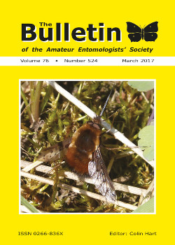 March 2017 Bulletin cover showing the Dotted Bee-fly _Bombylius discolor_.
