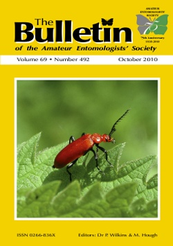 October 2010 Bulletin cover showing a Red-headed Cardinal Beetle, _Pyrochroa serraticornis_