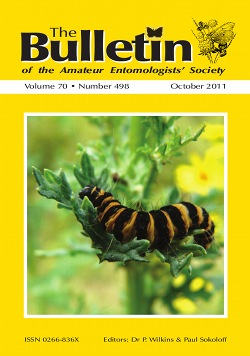 October 2011 Bulletin cover showing a photograph of the larva of the Cinnabar moth, _Tyria jacobaeae_, one of our colourful Artciid moths, which feeds on Common Ragwort.