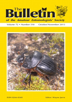 October/November 2013 Bulletin cover showing a male dung beetle _Copris lunaris_.