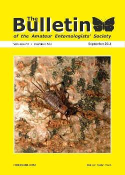 September 2014 Bulletin cover showing a female Wood cricket (_Nemobius sylvestris_).