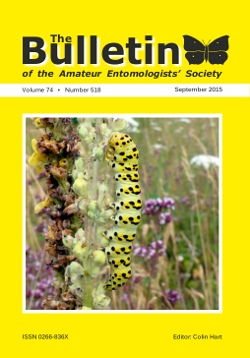 September 2015 Bulletin cover showing a larva of the Striped Lychnis moth (_Cucullia lychnitis_).