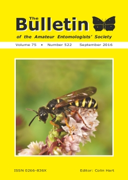 September 2016 Bulletin cover showing the solitary wasp _Cerceris ruficornis_.