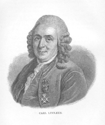 An engraving of Carl Linnaeus