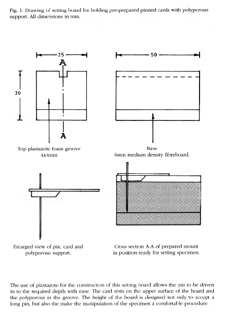 A diagram of a special setting board grooved to take the section of polyporous