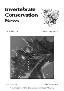 February 2013 Invertebrate Conservation News cover showing the longhorn beetle (_Agapanthia villosoviridescens_).
