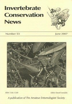 June 2007 Invertebrate Conservation News cover -  showing a photograph of a Wartbiter Cricket (_Decticus verrucivorus_)