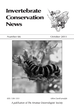 October 2011 Invertebrate Conservation News cover showing a photograph of the larva of the Cinnabar moth, _Tyria jacobaeae_, one of our colourful Artciid moths, which feeds on Common Ragwort.