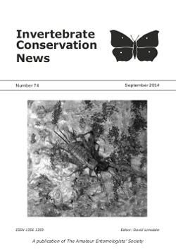 September 2014 Invertebrate Conservation News cover showing a female Wood cricket (_Nemobius sylvestris_).