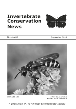 September 2016 Invertebrate Conservation News cover showing the solitary wasp _Cerceris ruficornis_.