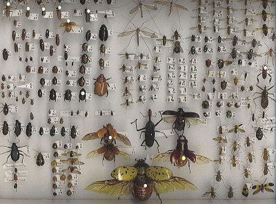 A photograph of an insect collection.