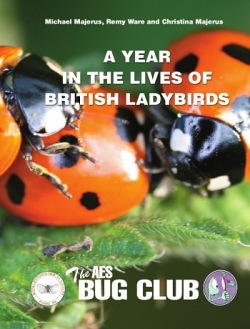Front cover of the the new publication, A year in the lives of British ladybirds, depicting a group of seven spot ladybirds